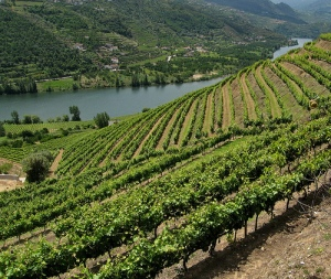 Douro Valley Wines (Photo: Yvon from Ottawa/Flickr)